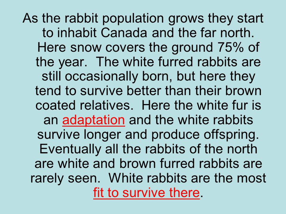 As the rabbit population grows they start to inhabit Canada and the far north.