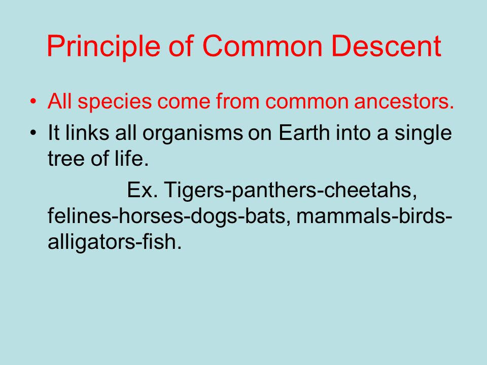 Principle of Common Descent