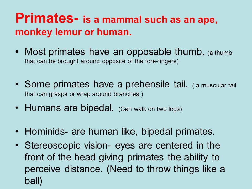 Primates- is a mammal such as an ape, monkey lemur or human.