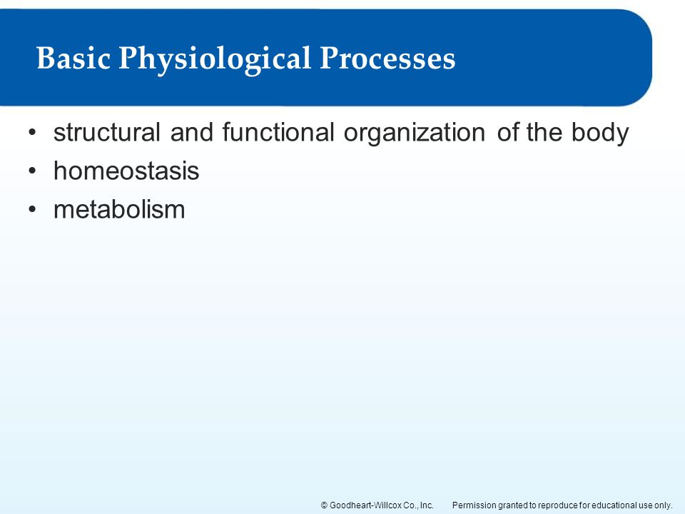 Basic Physiological Processes