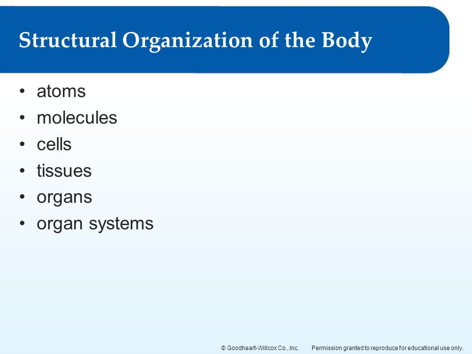 Structural Organization of the Body