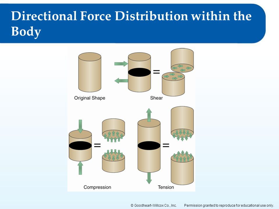 Directional Force Distribution within the Body