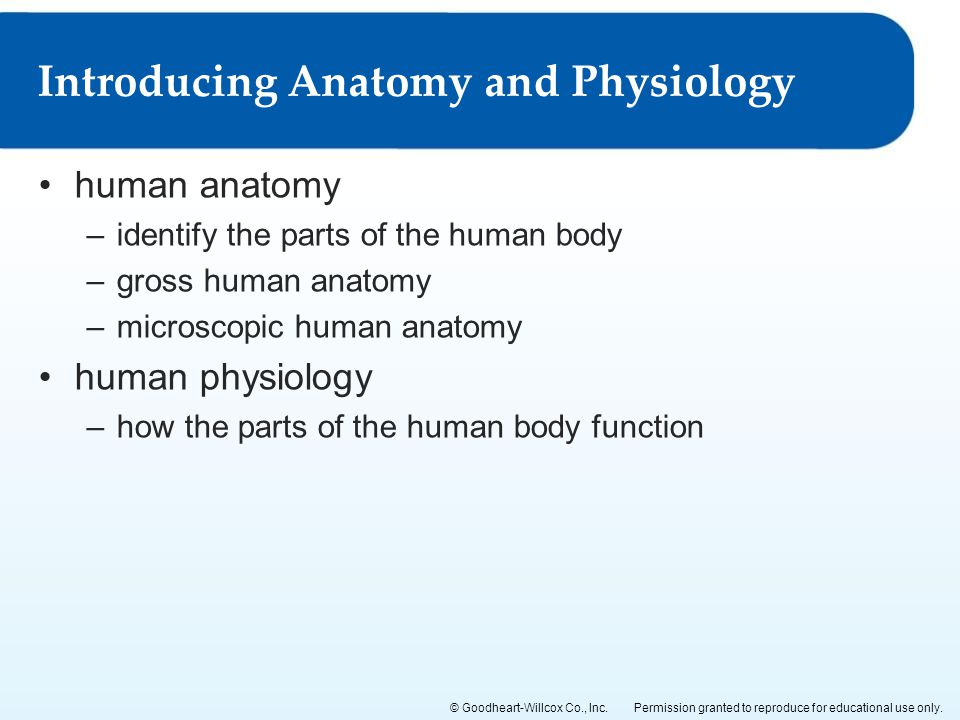 Introducing Anatomy and Physiology
