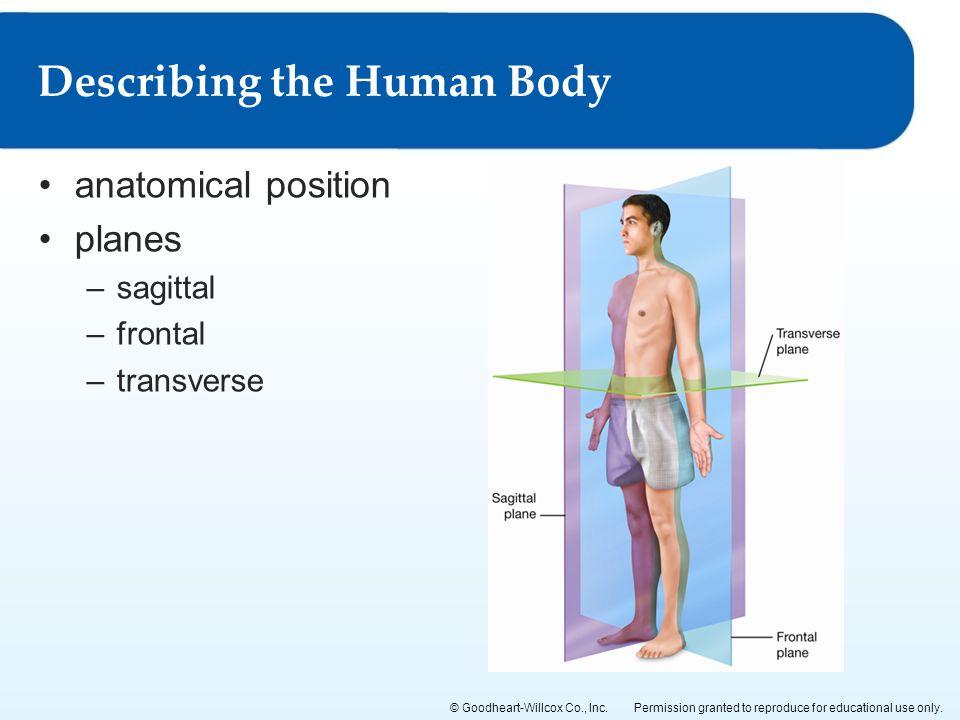 Describing the Human Body