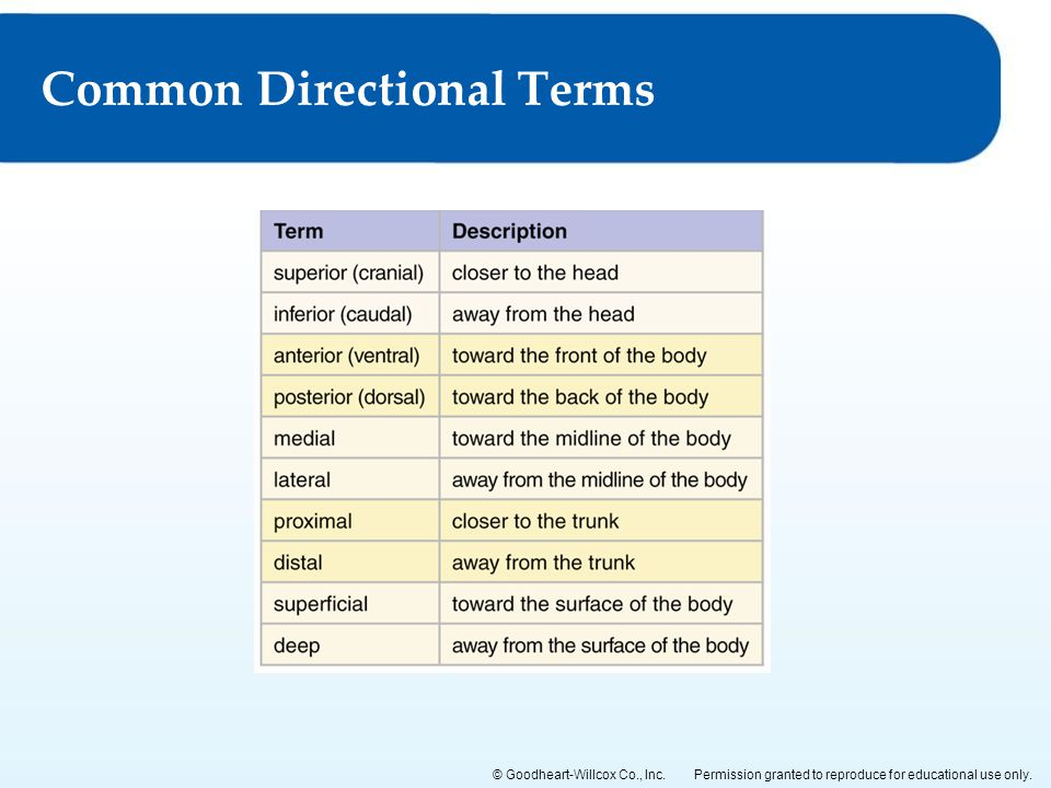 Common Directional Terms