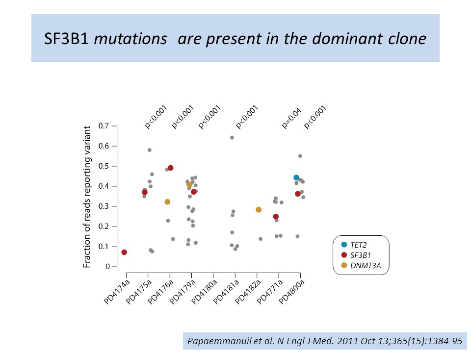 SF3B1 mutations are present in the dominant clone
