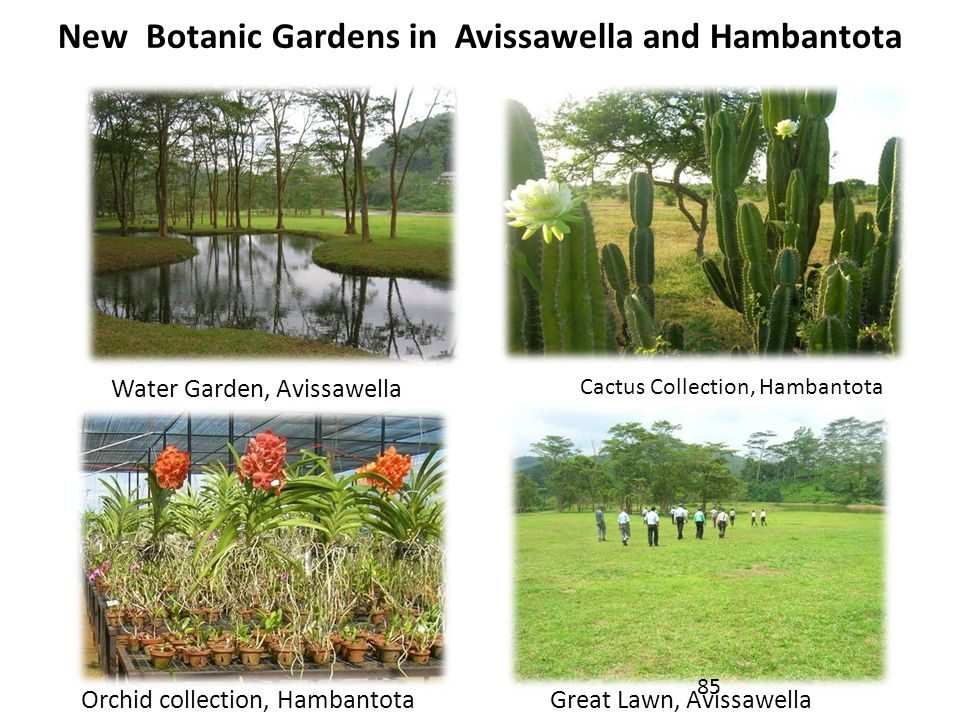 New Botanic Gardens in Avissawella and Hambantota