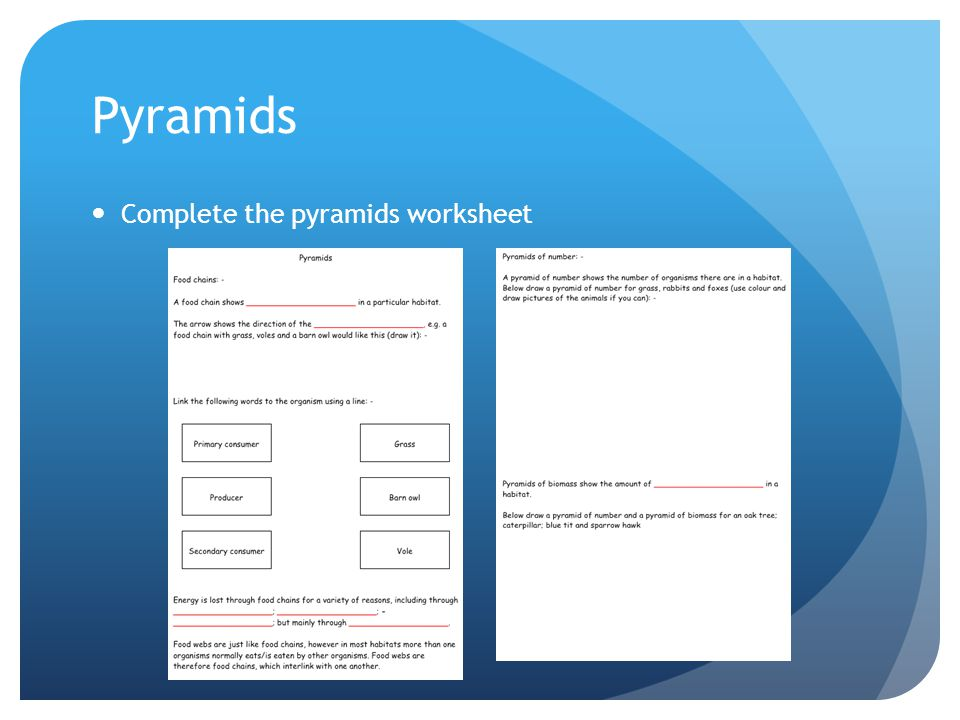 Government Worksheet Excel Pyramids Of Number  Biomass  Ppt Video Online Download Paragraph Writing Worksheets Excel with Integer Worksheets With Answers  Pyramids Complete The Pyramids Worksheet Similar Figures And Proportions Worksheets