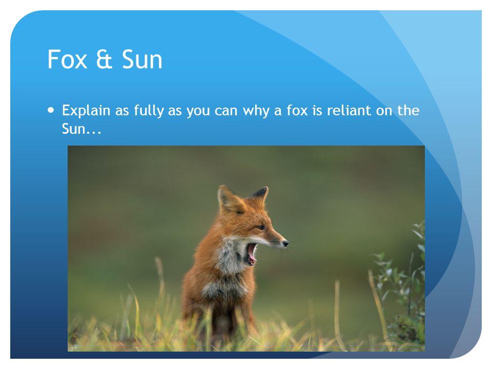 Fox & Sun Explain as fully as you can why a fox is reliant on the Sun...