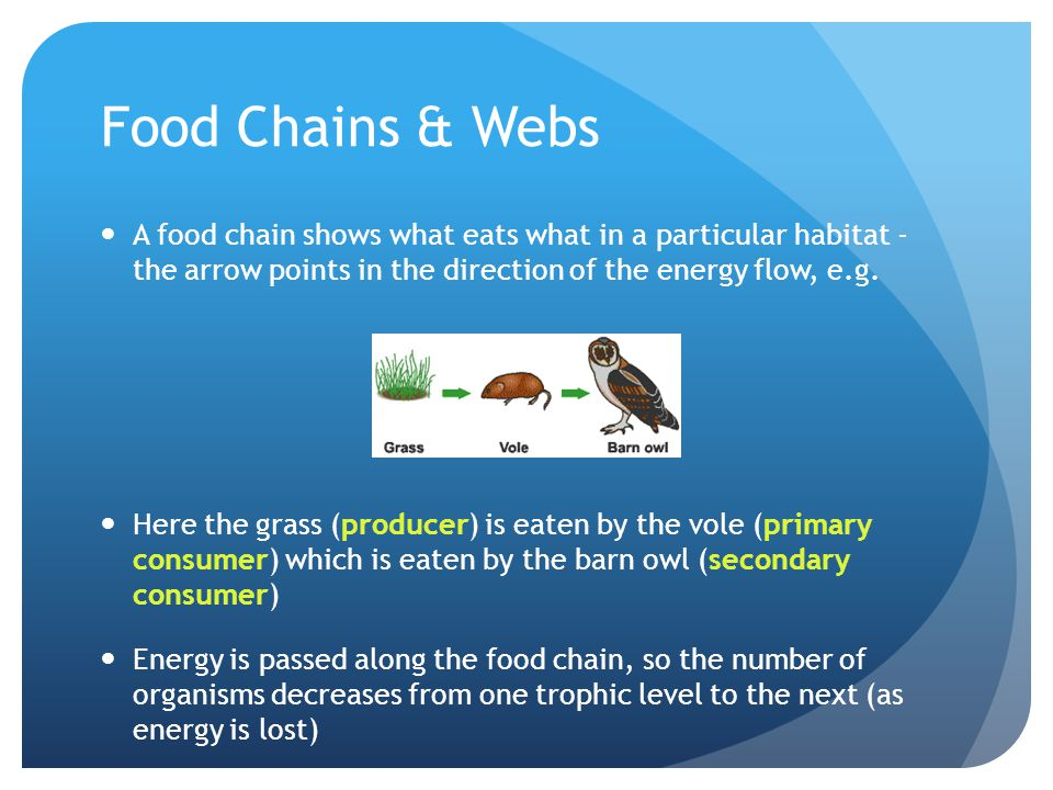 Food Chains & Webs A food chain shows what eats what in a particular habitat - the arrow points in the direction of the energy flow, e.g.