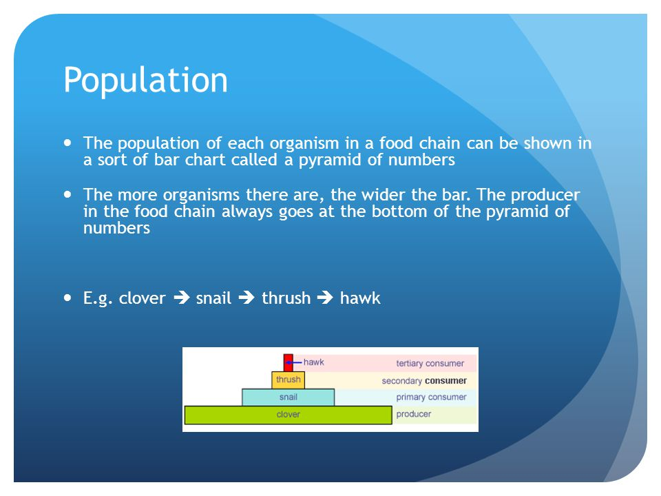 Population The population of each organism in a food chain can be shown in a sort of bar chart called a pyramid of numbers.