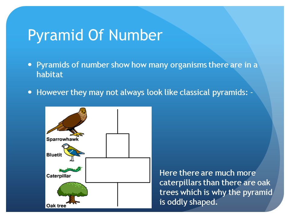 Pyramid Of Number Pyramids of number show how many organisms there are in a habitat. However they may not always look like classical pyramids: -