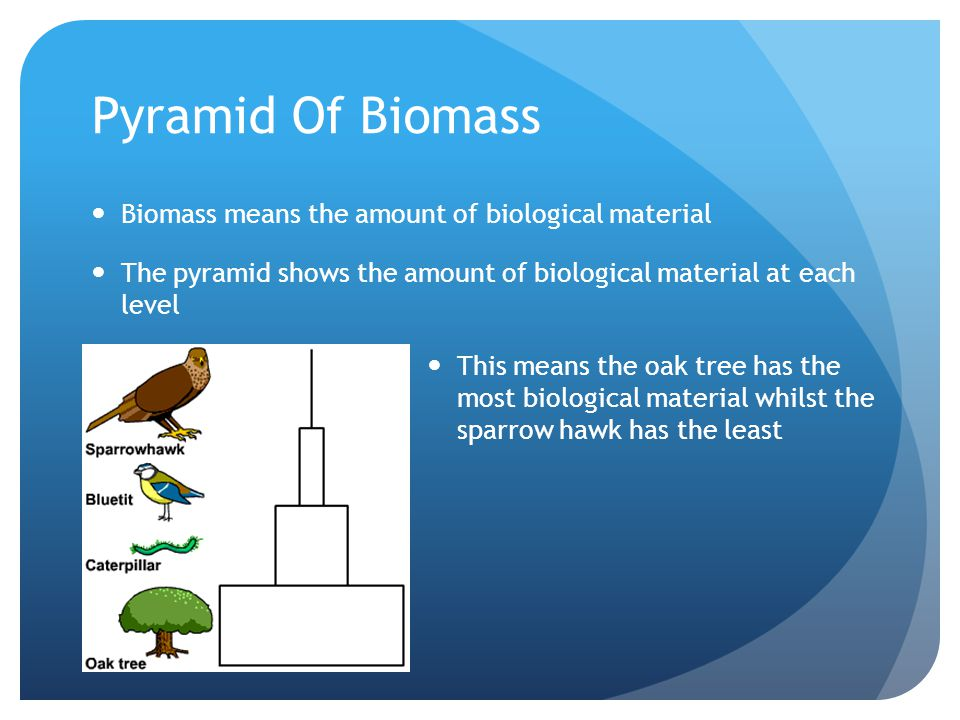 Pyramid Of Biomass Biomass means the amount of biological material