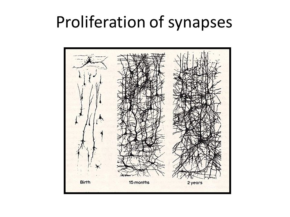 Proliferation of synapses