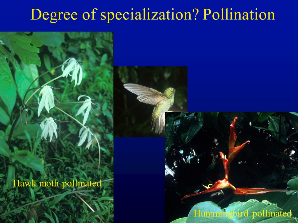 Degree of specialization Pollination