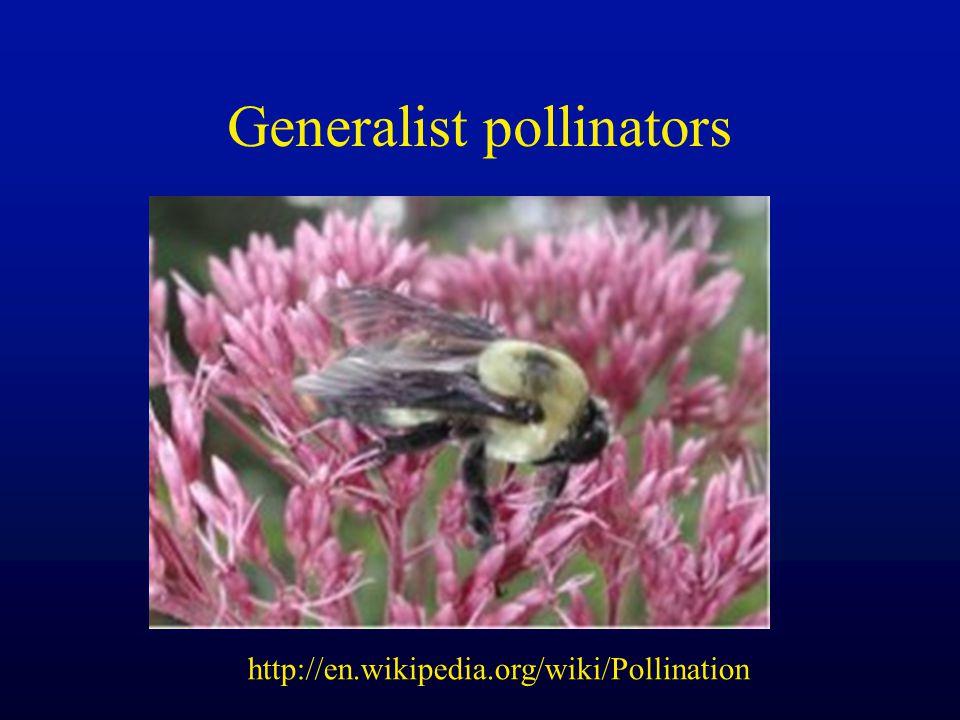 Generalist pollinators