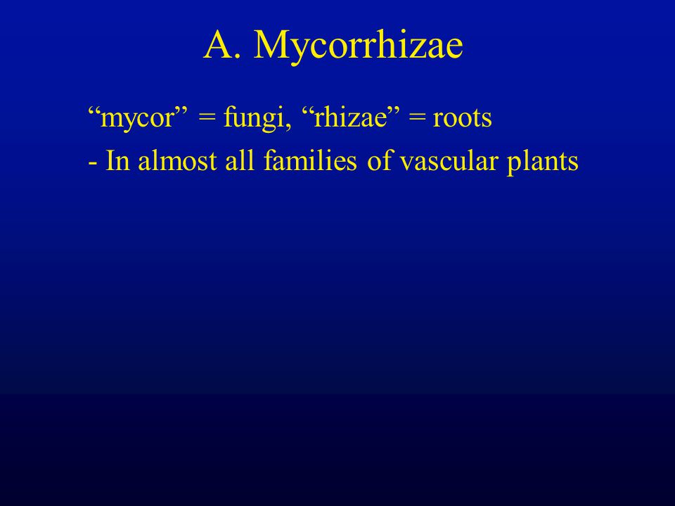 A. Mycorrhizae mycor = fungi, rhizae = roots