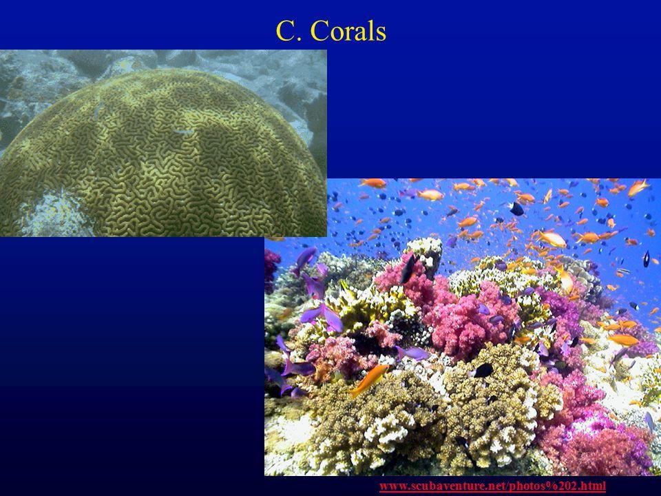 C. Corals www.scubaventure.net/photos%202.html