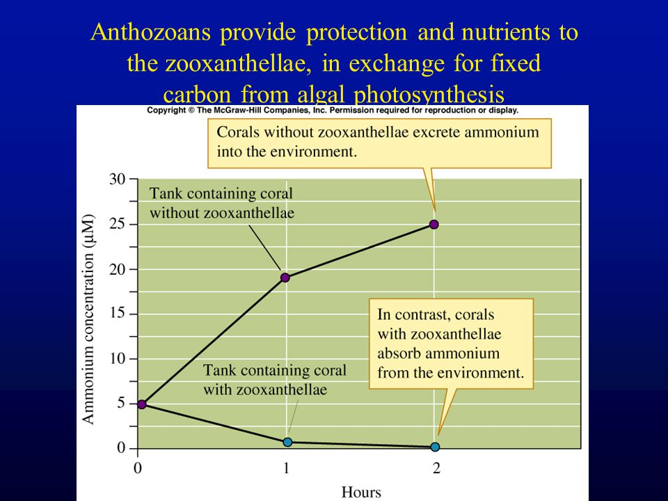 Anthozoans provide protection and nutrients to the zooxanthellae, in exchange for fixed carbon from algal photosynthesis