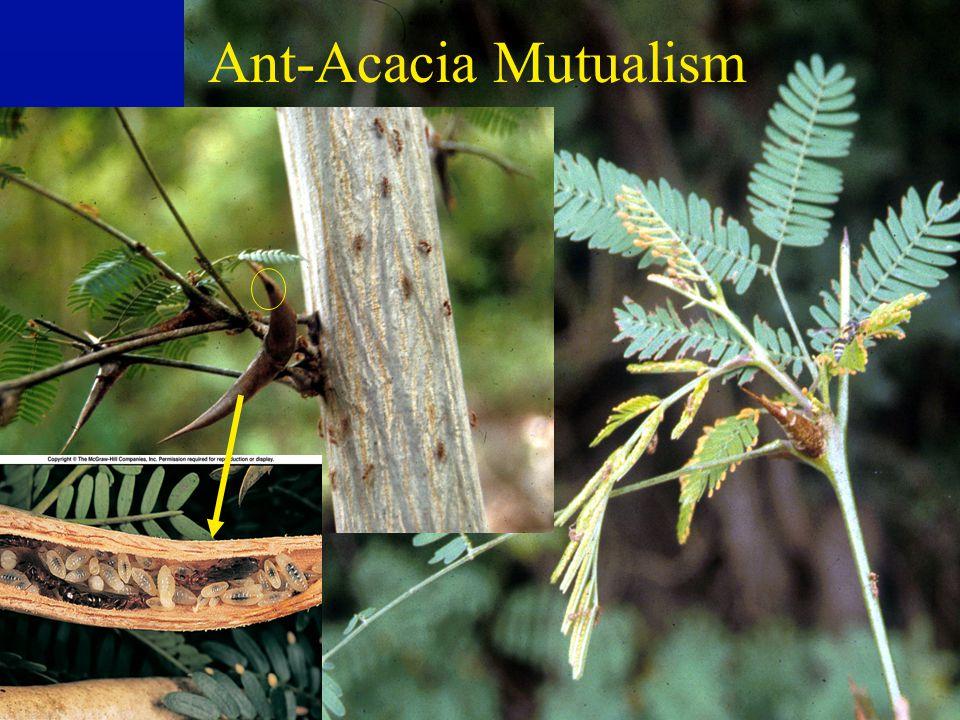 Ant-Acacia Mutualism
