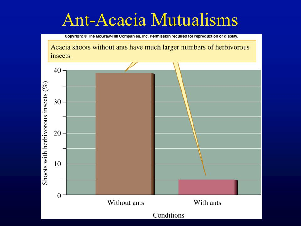Ant-Acacia Mutualisms