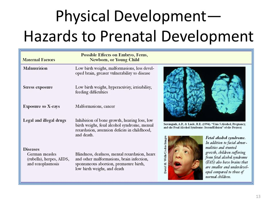 Physical Development— Hazards to Prenatal Development