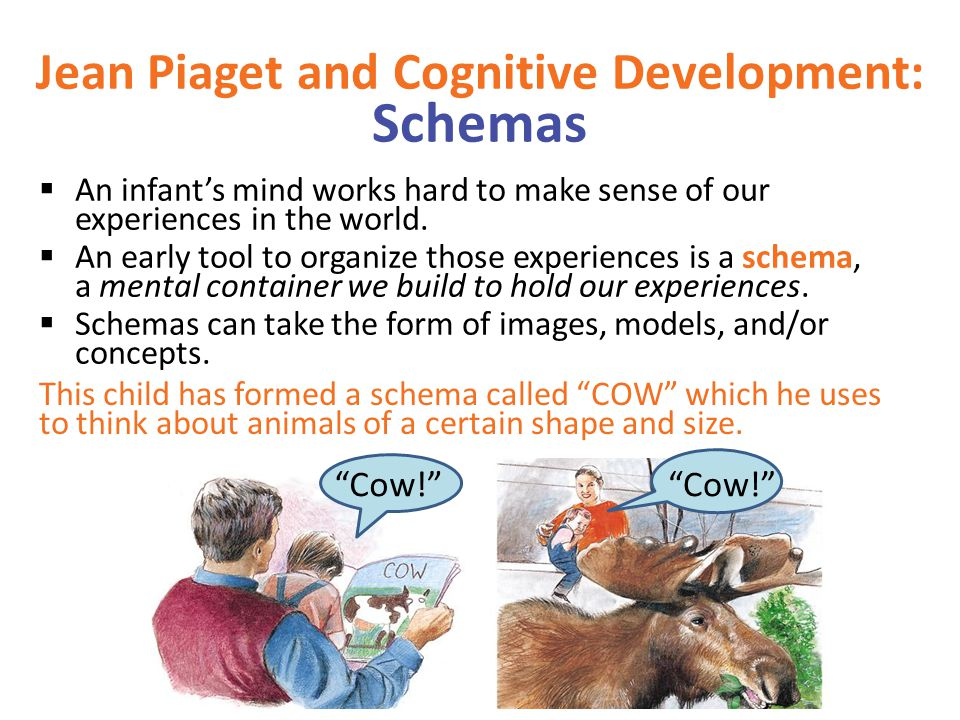 Jean Piaget and Cognitive Development: Schemas