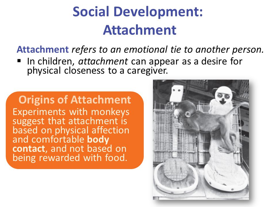 Social Development: Attachment