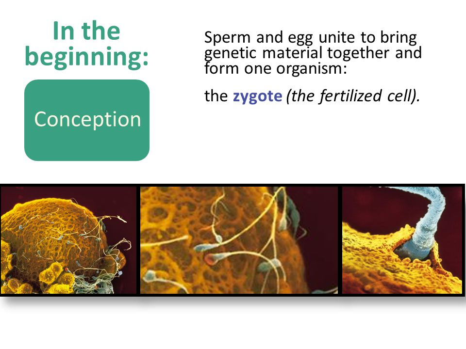 In the beginning: Conception