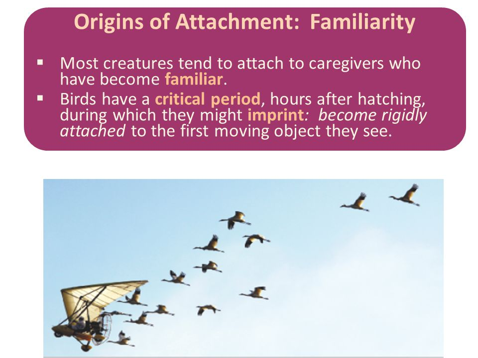 Origins of Attachment: Familiarity