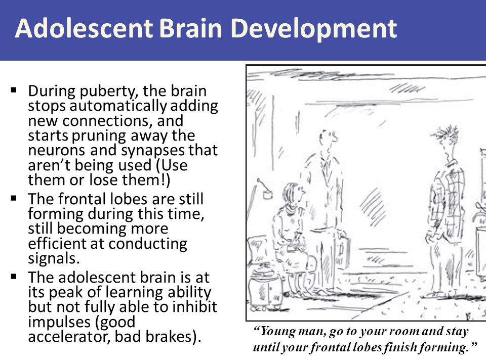 Adolescent Brain Development
