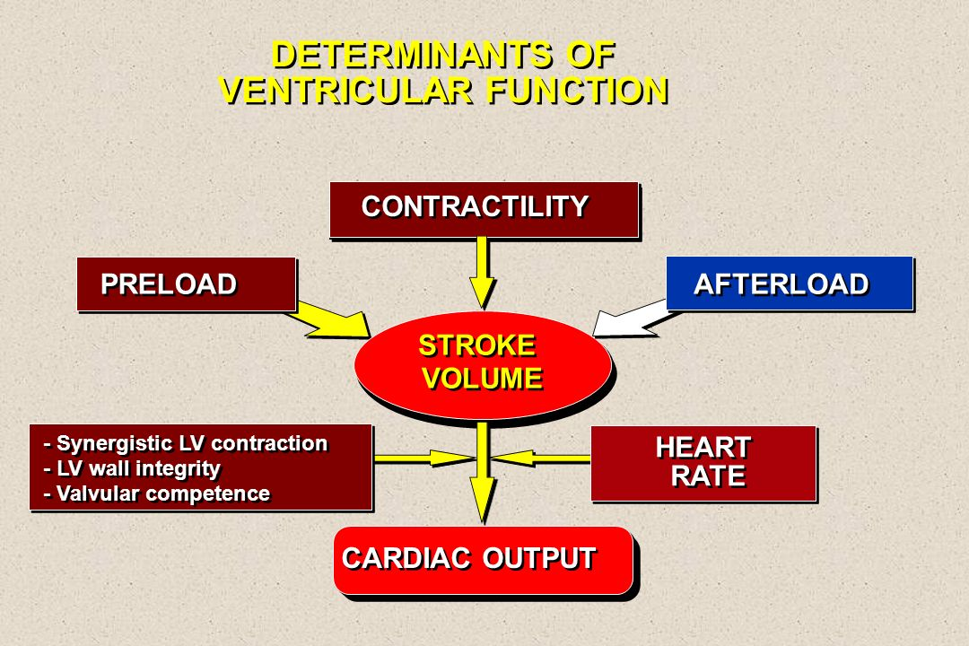 DETERMINANTS OF VENTRICULAR FUNCTION