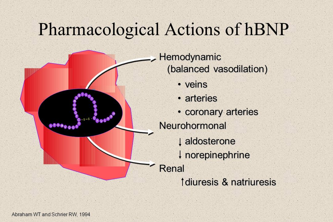 Pharmacological Actions of hBNP