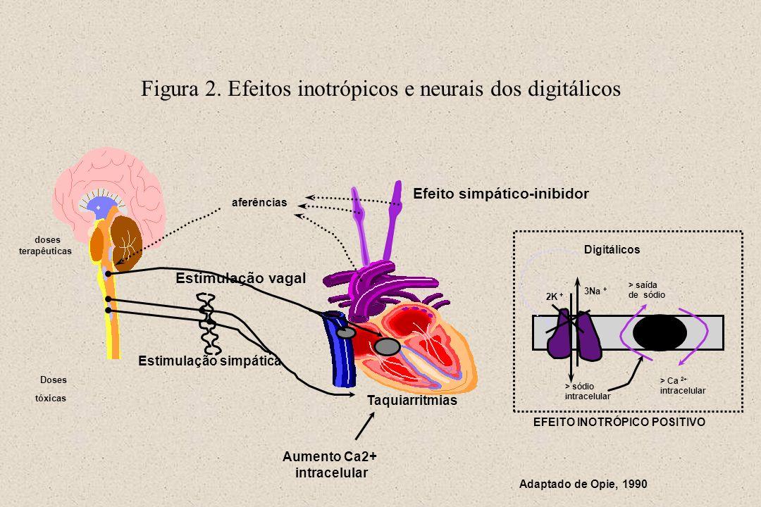 Figura 2. Efeitos inotrópicos e neurais dos digitálicos