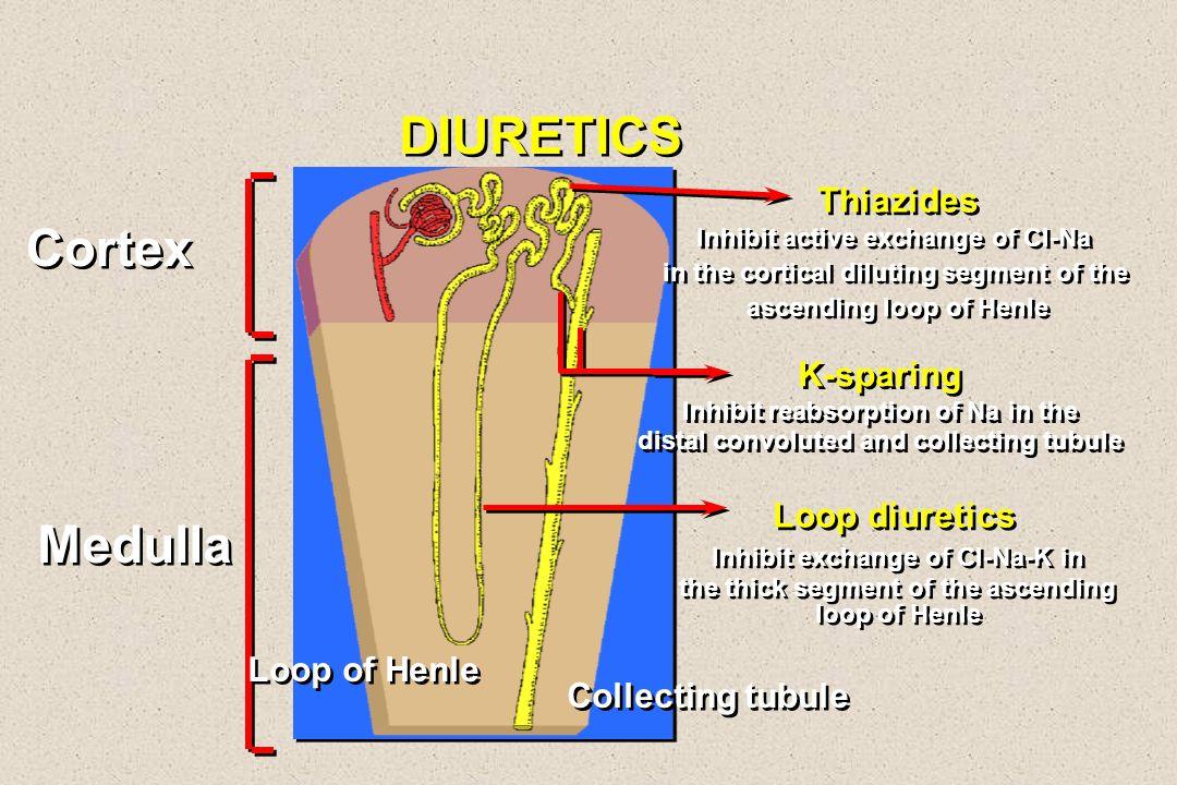 DIURETICS Cortex Medulla Thiazides K-sparing Loop diuretics