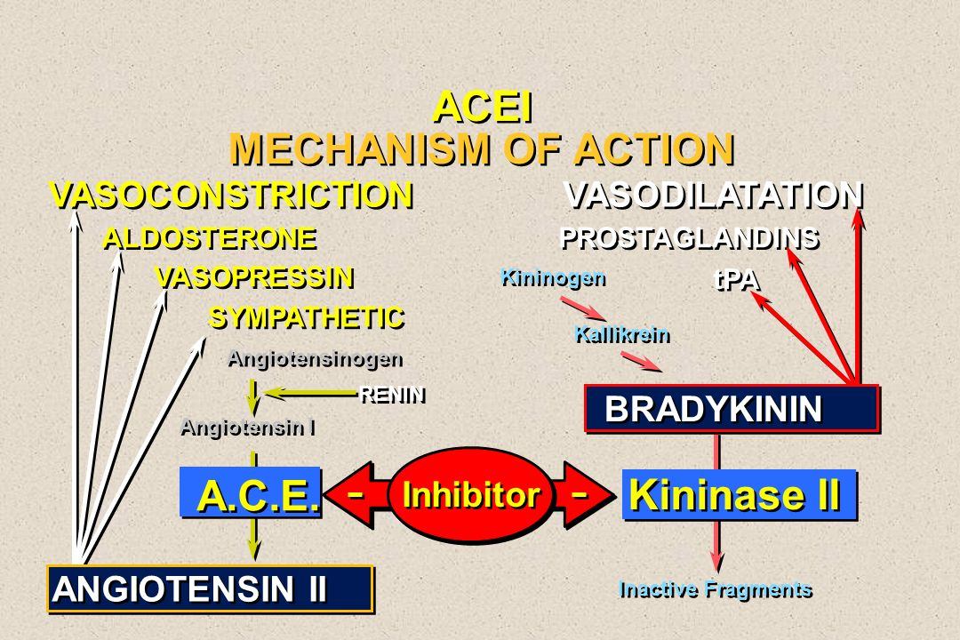 ACEI MECHANISM OF ACTION A.C.E. Kininase II