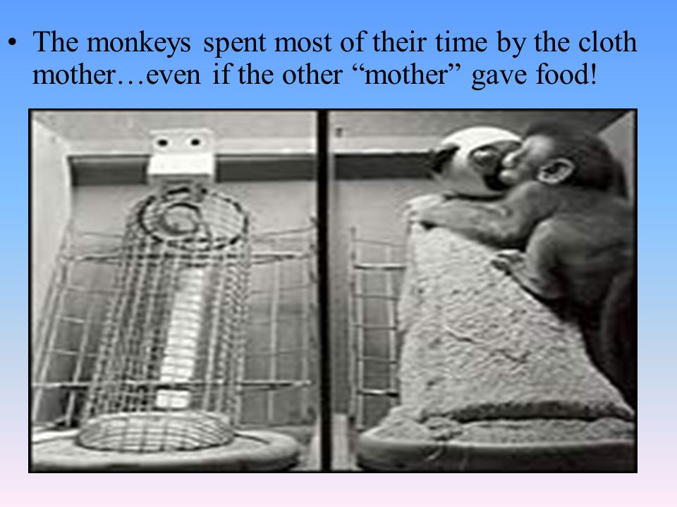 The monkeys spent most of their time by the cloth mother…even if the other mother gave food!