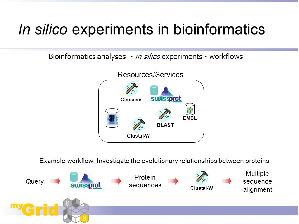 In silico experiments in bioinformatics