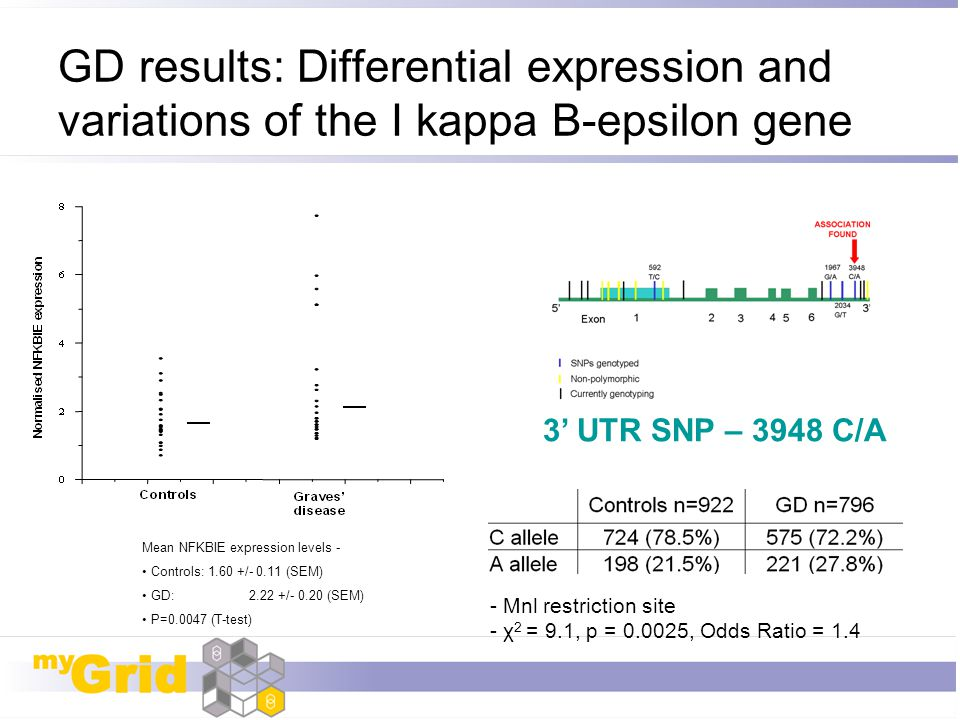 GD results: Differential expression and variations of the I kappa B-epsilon gene