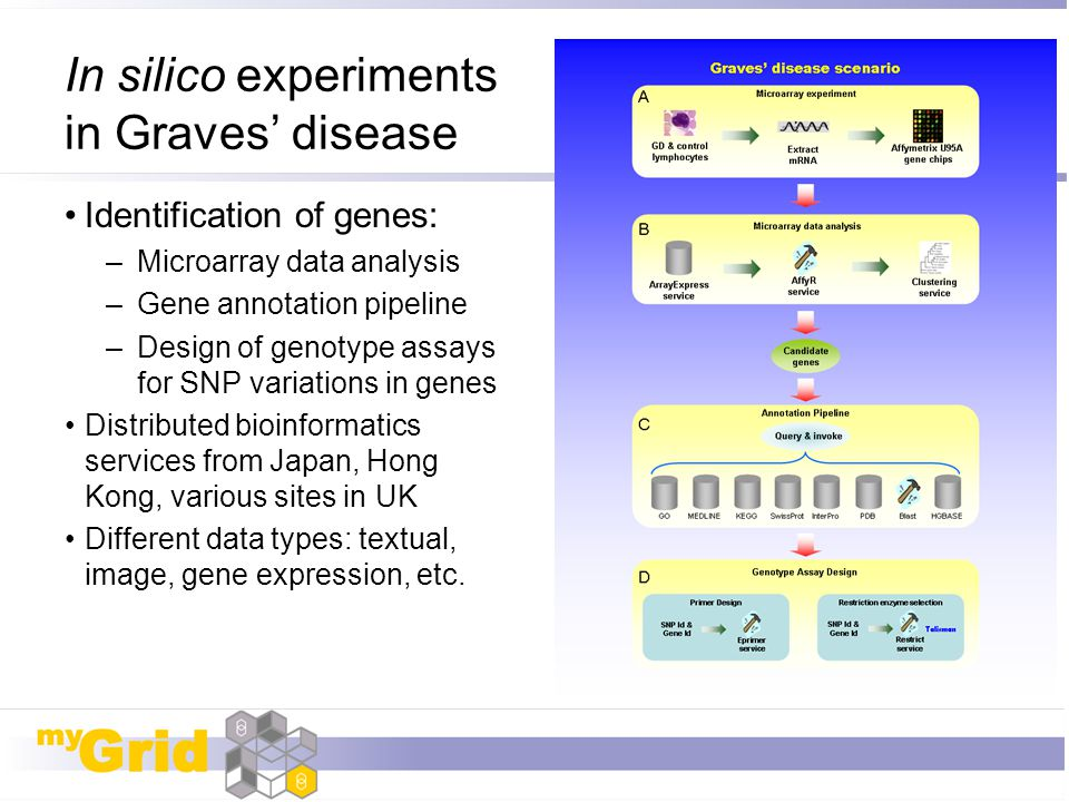 In silico experiments in Graves' disease