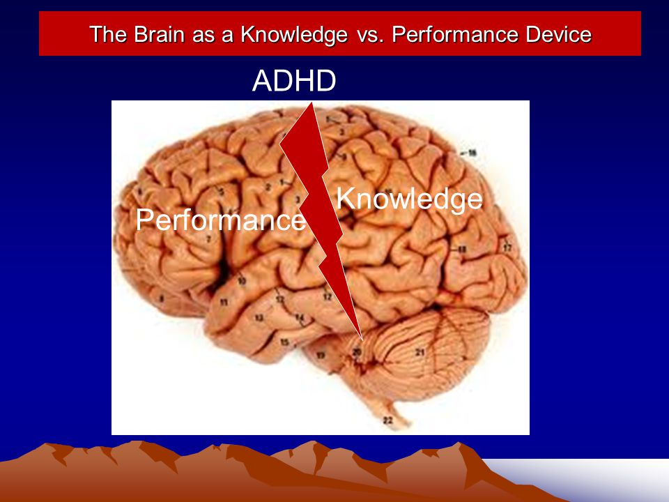 The Brain as a Knowledge vs. Performance Device