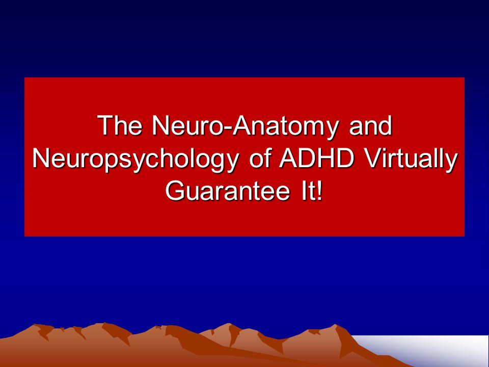 The Neuro-Anatomy and Neuropsychology of ADHD Virtually Guarantee It!
