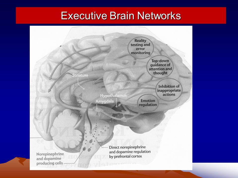Executive Brain Networks