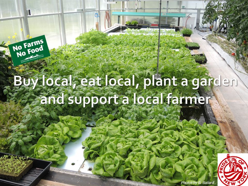 Buy local, eat local, plant a garden and support a local farmer