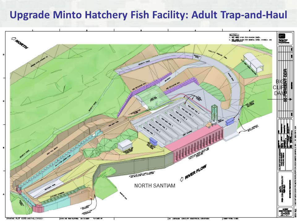 Upgrade Minto Hatchery Fish Facility: Adult Trap-and-Haul