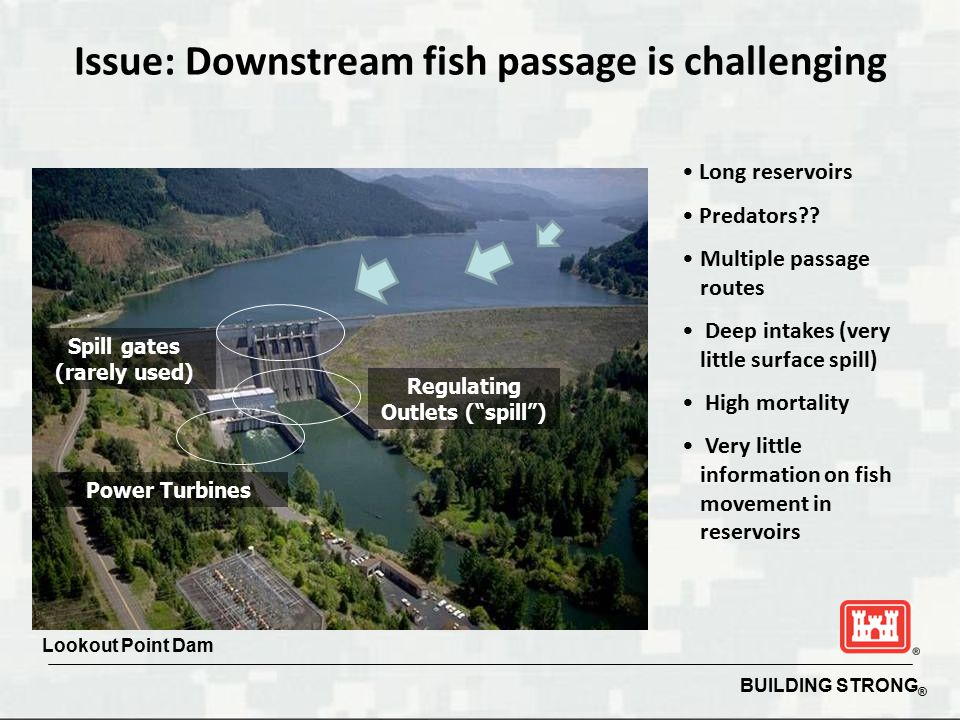 Issue: Downstream fish passage is challenging