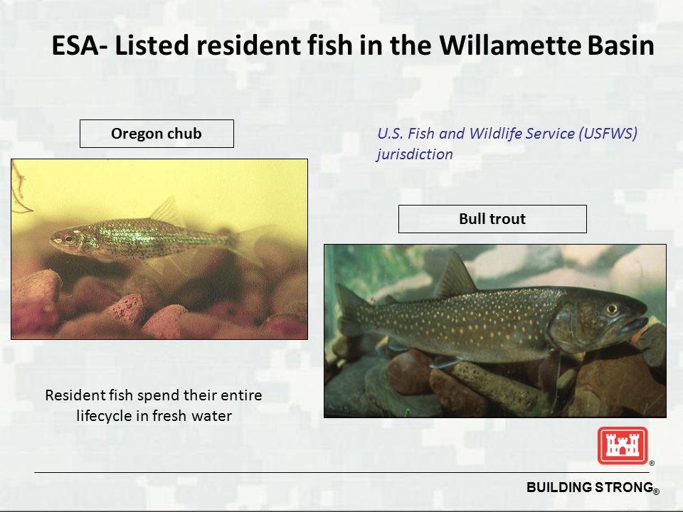 ESA- Listed resident fish in the Willamette Basin
