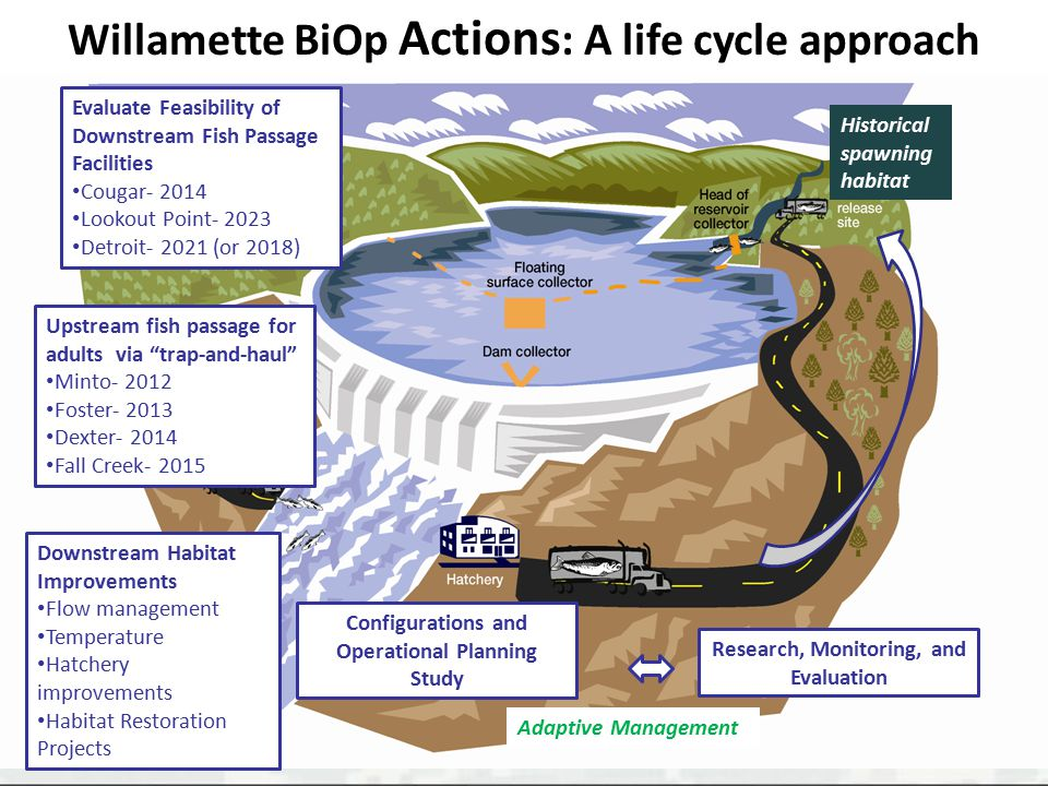 Willamette BiOp Actions: A life cycle approach