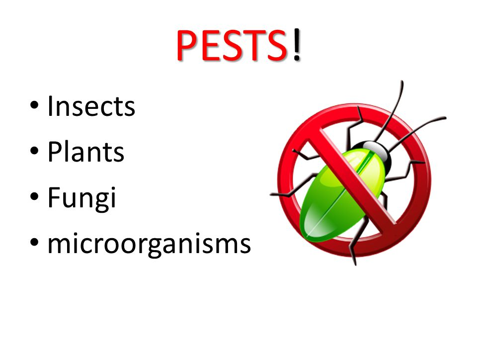 PESTS! Insects Plants Fungi microorganisms