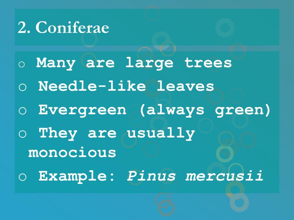 2. Coniferae Needle-like leaves Evergreen (always green)